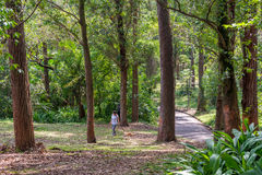 People walk together with their dog at the Aclimacao Park Stock Images