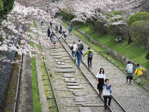 People walking along the tracks of a disused railway under beautiful cherry blossom trees. Keage Incline, Kyoto, Japan - April 5, 2017 : People walking along the Stock Photo