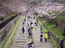 People walking along the tracks of a disused railway under beautiful cherry blossom trees. Keage Incline, Kyoto, Japan - April 5, 2017 : People walking along the Stock Image
