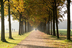 People walking in autumn lane Royalty Free Stock Photo
