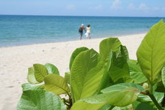 People walking on beach. People walking on the beach by the ocean with leafy plants in the foreground Stock Image
