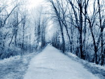 People Walking - Blue. People walking on path with dog - faux infrared stock image
