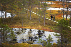 People walking on boardwalk in Lahemaa National Park in Estonia Royalty Free Stock Images
