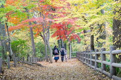 People walking in colorful autumn forest Royalty Free Stock Photo