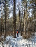 People walking at deep forest in winter stock photo