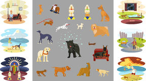 People walking with dogs. People walking with different breeds of dogs infographic.  on white background vector illustration eps 10 Royalty Free Stock Photos