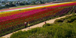 People Walking by Flower Field Royalty Free Stock Photo