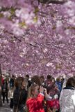 People walking in a flowery park Stock Image