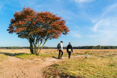 People walking on footpath in nature in autumn, Netherlands Stock Photography