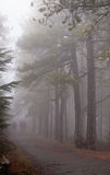People walking in a forest with fog Royalty Free Stock Photo