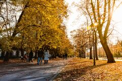 People Walking on Gray Concrete Pathway Between Trees during Daytime Stock Photos