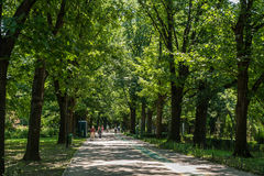 People Walking In Herastrau Park Stock Image