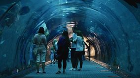 People walking inside the Oceanarium tunnel at Dubai Mall. UAE, DUBAI - 26 APRIL 2016: People walking inside the Oceanarium tunnel at Dubai Mall stock video footage