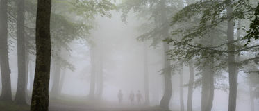 People walking at Iraty forest in a foggy morning. stock photography