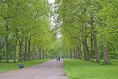 People walking in a large park with trees Royalty Free Stock Images