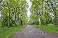 People walking in a large park with trees Stock Photo