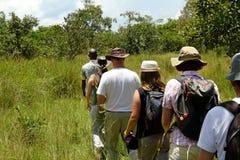 People walking in a line through the forest on safari. A group of tourists walk single file following a local guide on safari in Ziwa Rhino Sanctuary, Uganda stock photo