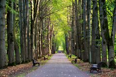 People walking in old park alley. Sunny autumn day. Royalty Free Stock Photo