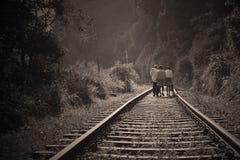 People Walking on Railroad Tracks Stock Photo
