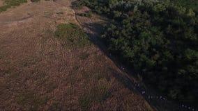 People walking in rural fields. Drone aerial footage stock footage