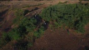 People walking in rural fields. Drone aerial footage stock video