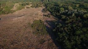 People walking in rural fields. Drone aerial footage stock video footage