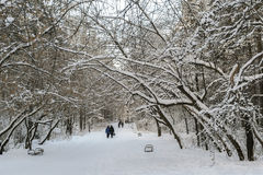 People  are walking  on the snow-covered winter park alley. Stock Image