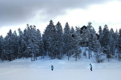 People Walking Through Snow in Mountain Wilderness Pine Forest royalty free stock photo