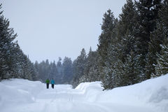 People Walking Through Snow in Mountain Wilderness Pine Forest Stock Photo