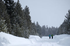 People Walking Through Snow in Mountain Wilderness Pine Forest stock photography