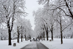 People walking in during snowfall in the park in Sofia, Bulgaria, Dec 29, 2014 Stock Photo