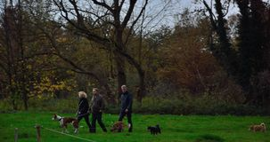 People walking their dogs on sunday Royalty Free Stock Photography