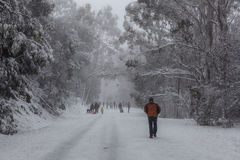 People walking and tobogganning up the snow covered road on Moun Stock Photography