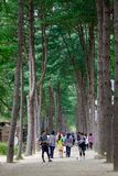 People walking at the tree park royalty free stock photo
