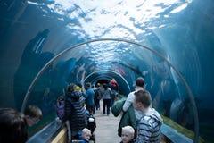 Tunel royalty free stock photos