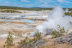People walking on wooden walkways in Norris Geyser Basin in Yellowstone National Park. Hot springs, geysers, steam, bacteria in Norris Geyser Basin area in Stock Images