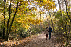 People walking in woods, fall in Netherlands Royalty Free Stock Image