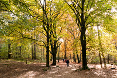 People walking in woods, fall in Netherlands. DOORN, NETHERLANDS - OCT 25, 2015: People walking in the woods on a sunny day in autumn Stock Photos