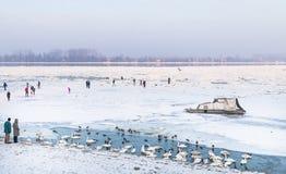People walks on frozen river Danube Royalty Free Stock Photos