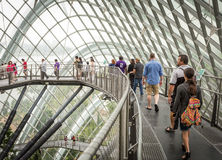 People on walkway in Cloud Forest, Singapore. People walking on walkway in Cloud Forest in Gardens by the Bay, Singapore Royalty Free Stock Images