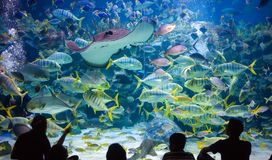 People watch for the sea life in the oceanarium of Kuala Lumpur.  Royalty Free Stock Photos