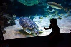 People watch for the sea life in the oceanarium of Kuala Lumpur.  Stock Photos