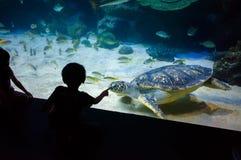 People watch for the sea life in the oceanarium of Kuala Lumpur.  Stock Image