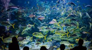 People watch for the sea life in the oceanarium of Kuala Lumpur Royalty Free Stock Photography