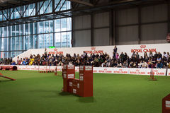 People watching an agility competition at the international dogs exhibition of Milan, Italy Stock Photography