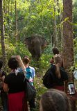 People watching elephants and taking photos in Cambodia stock images