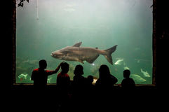 People watching fish in aquarium Royalty Free Stock Photography