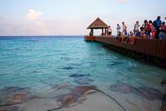 People watching Manta Ray seeking food. Ghost fishes eating in the sea water, Vittaveli island, Maldives Royalty Free Stock Photo