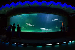 People watching shark inside big aquarium Stock Photos