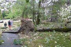 People Watching the Tree Rooted by Windstorm. A windstorm assaulted Vancouver in Aug 29, 2015 Stock Image